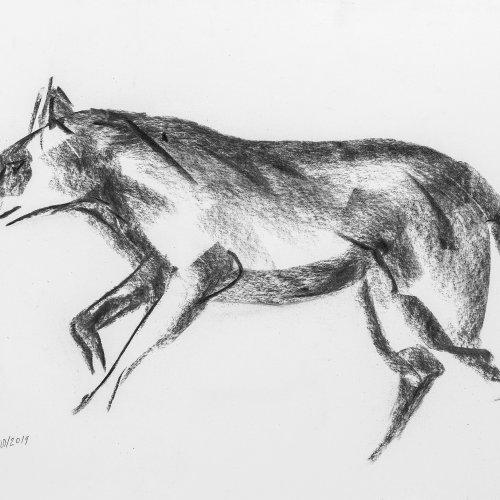 Weickmann, Franz. Wolf. Kohlezeichnung. 34,5 x 49 cm. Monogr., dat. 2019.